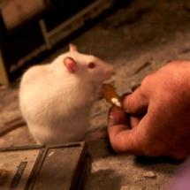 Rat at Terra 2084